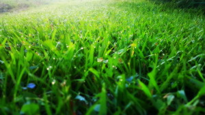 close up view of grass with dew